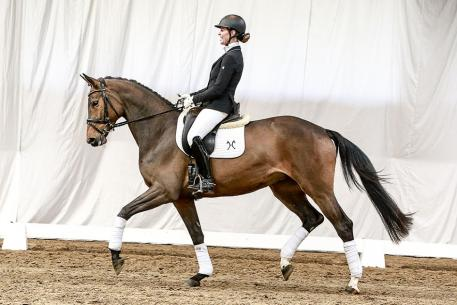 Belissaria by Belissimo M/Embassy I presented by Victoria Jade Harding, showing best ride-ability and temperament