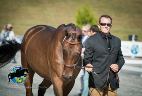CCI3* Competitor Bobby Meyerhooff and Dunlavins Token, fair hill, 2016