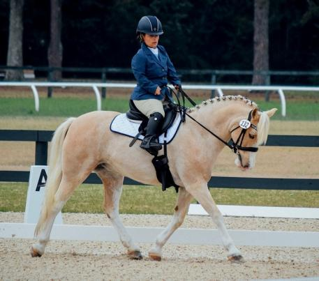 Zoey, a 13.2 Welsh Section C is a perfect fit as Meghan Benge's partner for both driving and riding. (Photo: Pics of You)