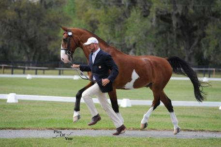 Chester Weber and Splash strut their stuff during the Driving Horse Inspection.