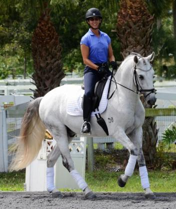 Cristal Da Caniceira is a 2009 Lusitano gelding imported from Portugal (Vionlino – Pua, Hostil). He has shown to Prix St. Georges and it talented for piaffe, passage and trot extension. Photo by Mary-Ellen Jansen.