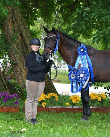 Daphne Bigelow's Connemara-cross mare Kiss Me Kate claimed the NDPC Grand Championship at the 2018 National Dressage Pony Cup Championship Show's Dressage Sport Horse Breeding competition. Photo by Jennifer M. Keeler.