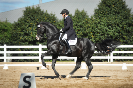 Every breeder's dream: To see their own offspring perform in Grand Prix – here Doctor Wendell with Jim Kofort.