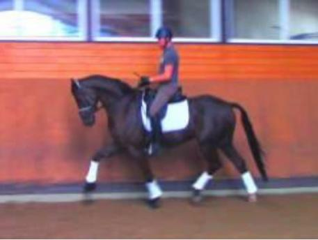 Endel Ots and his now 6-year old Hanoverian gelding Lucky Strike (by Lord Laurie/His Highness), here during a training session with Christine Traurig last year in preparation for the Young Horse World Championships
