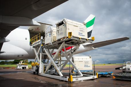 Horses bound for the Rio 2016 Olympic games are loaded onto an Emirates SkyCargo Being 777-F at London Stansted Airport. On the flight were 34 horses from 10 of the nations competing in Equestrian at Rio 2016 (FEI/Jon Stroud Media)