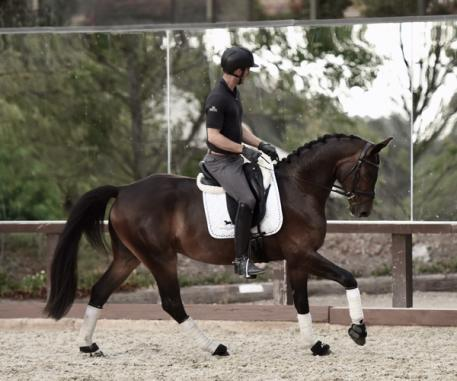 For Finland - 2013 Oldenburg Gelding (00,000 and Up)