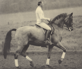 German Master Harry Boldt showing a perfectly collected horse, trained based on the principles of the training pyramid, a well-tried and proven concept.