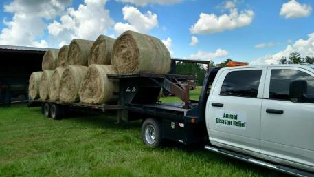 Hay is on the way to Louisiana