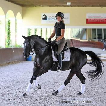 May Internet Auction Offering: Imported Dutch Dressage Mare - Successful 3rd Level, schooling 4th level