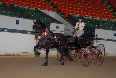 Champion Driver Suzy Stafford and Isobel Ypkje van het Kasteel a five year old Friesian mare owned by Gail Aumiller winning the Carriage Driving Division classes at the 2015 IFSHA Region 1 Championships.