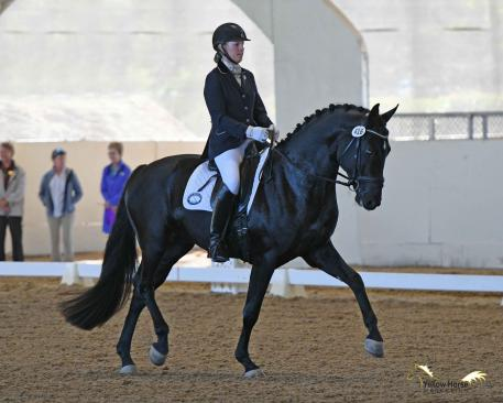 Karen Cornelius and Fiderello were foot-perfect in their First Level Freestyle to earn the first championship title awarded at the 2017 Great American Insurance Group/USDF Region 7 Championships, held as part of the 50th Anniversary California Dressage Society Championship Show
