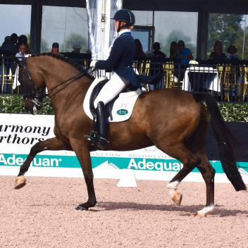 Katherine Bateson-Chandler and Alcazar performed beautifully together in the FEI Grand Prix class, scoring a 71.88%