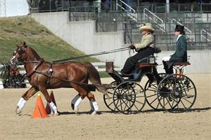 Katie Whaley, USEF Pair Pony Driving National Championship, Kentucky Classic CDE, Kentucky Horse Park