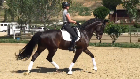 Kim McGrath and Winslow participating in the West Coast's USEF Dressage Observation & Strategic Winter/Spring Training Sessions