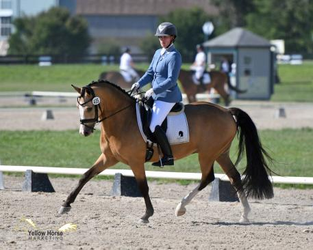 New Jersey's Lauren Chumley and Nikolas won both the Third and Fourth Level Open Championships at the 2017 National Dressage Pony Cup Championship Show.