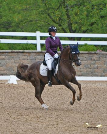 Lauren Chumley of Pittstown, N.J. and Melissa Dowling's Morgan gelding Avatar's Jazzman earned victories in both Open FEI and Open Freestyle divisions with their Grand Prix performances. Photo by Jennifer M. Keeler.