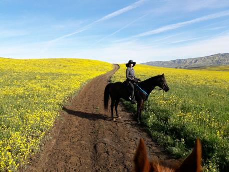 Cuyama Oaks Ride, March 2017, where Peggy completed two limited distance rides.