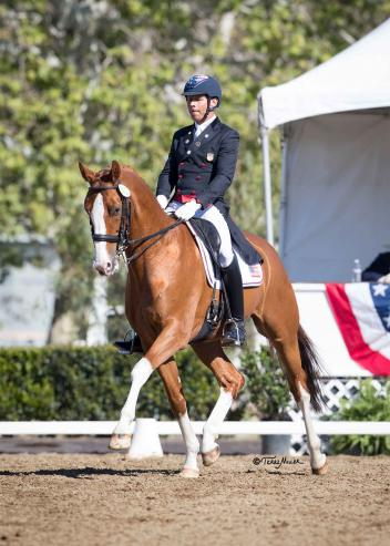 Steffen Peters had a winning weekend in the small tour at the Dressage Affaire with Four Winds Farm's Oldenburg Bailarino. (Photo: Terri Miller)