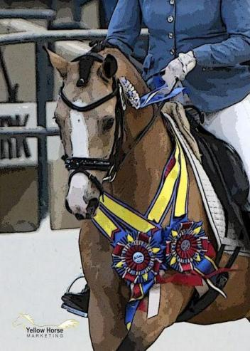 Organizers have announced the cancellation of this summer's National Dressage Pony Cup Championship Show to allow time for creation of a new and improved stand-alone event in 2019