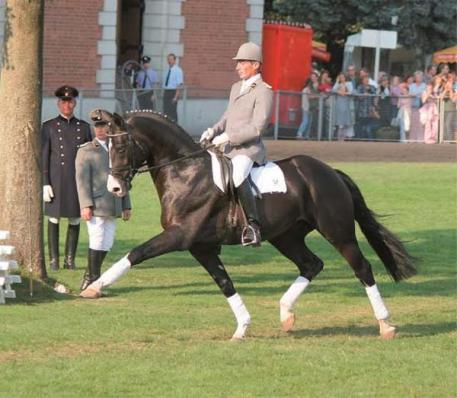 Rascalino - 2001 Black Hanoverian Stallion (Rotspon x Veleten III x World Cup II)