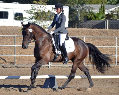 Sarah Lockman & Dehavilland were one of the Great American Insurance Group/USDF Region 7 Champions crowned on the second day of the 2015 CDS Championship Show.  Photo: Jennifer M. Keeler