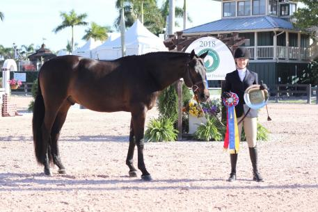 Scripted with owner Melissa Jacobs receiving their Triple Crown Excellence Award during the Winter Equestrian Festival.