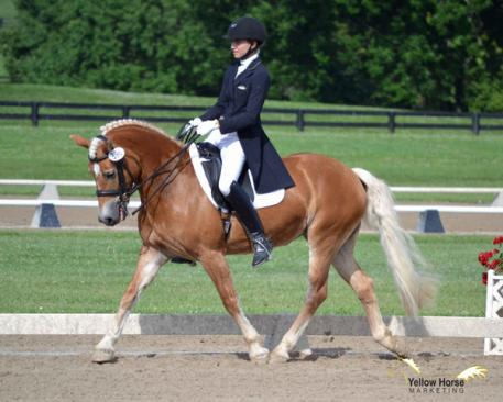 The National Dressage Pony Cup's expanded year-end awards program to include a Small Horse Division provides yet another opportunity for small but mighty dressage mounts to shine. (Photo: Jennifer M. Keeler)