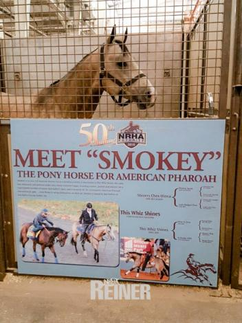 Smokey has become America's beloved pony horse and loyal companion to the one and only American Pharaoh.