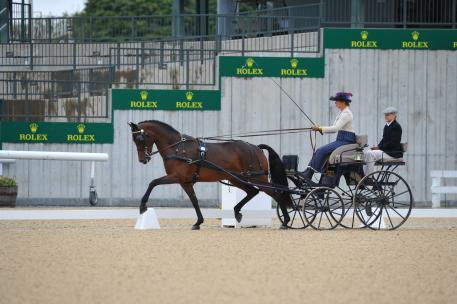 """Champion Driver Suzy Stafford take the win in the 2015 FEI Kentucky Classic CDE with her Morgan Mare """"PVF Peace Of Mind"""""""