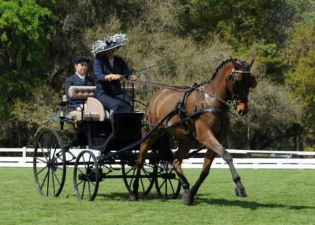 Suzy Stafford & PVF Peace of Mind on their way to another top dressage score at Live Oak International. (Photo: Pics of You)