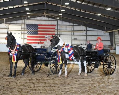 The Stafford Carriage Driving team once again topped the leaderboard at The International Friesian Show Horse Association show, earning 20 championship titles across a multitude of divisions.