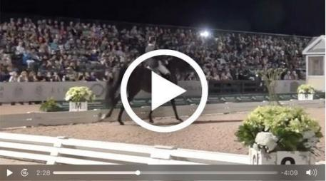 Click on photo to watch Tinne Vilhelmson-Silfvén's freestyle test on Paridon Magi(Courtesy: Richard's Equine Video)
