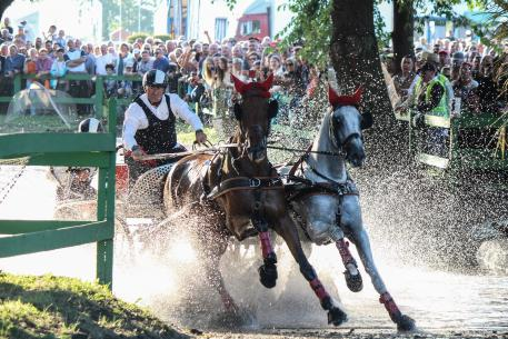 Vilmos Lázár (HUN) is cheered on by home fans as he splashes through the water with his horses Bental 10 and Coner en route to a successful defence of his FEI World Pairs Driving Championships title at the Kinizi Horse Park in Fábiánsebestyén. (FEI/Krisztina Horváth)