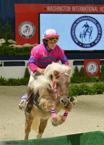 The WIHS Shetland Pony Steeplechase Championship Race is one of the most popular exhibitions.