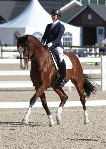 Comet V (Come Back II x Wenessa/Leandro) Danish Warmblood owned by Paul and Sheelagh Christensen. Dressage at Devon 2014 6th place 4th Level Test 2. Photo: Conklin Photography LLC