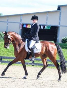 David Collins riding Bojing (unattributed but taken from his website, www.centerlinestables.org)