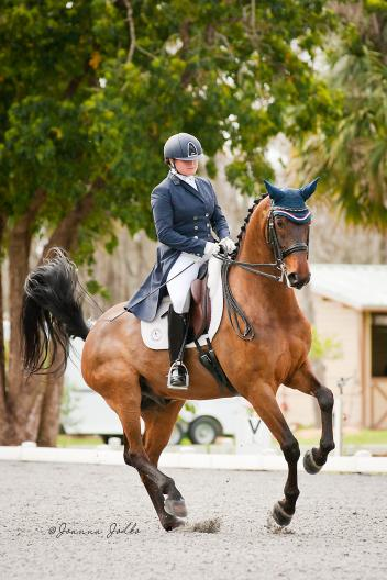 Emily Smith and Dublin (Desperados x Weltgiest) score a 76.316% in the first show at the Carousel Connection Dressage Show, Longwood Farm South, Ocala, Florida. Photo: Joanna Jodko jjodkophoto.com