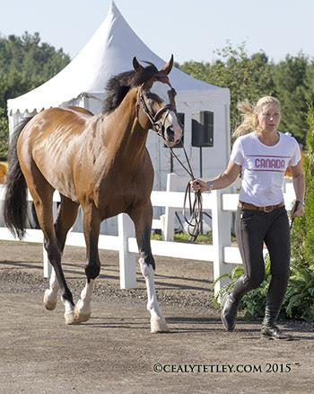 Eric Lamaze's mount, Coco Bongo, owned by Artisan Farms LLC, presented by groom Bo Vaanholt. (Photo © Cealy Tetley)