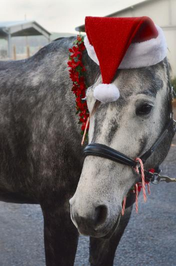Introducing the Ice Horse Holiday Giveaway and Cappy, the Ice Horse Holiday Elf