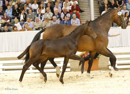 Fly by Bundeschampion Franziskus became top-priced youngster, sold at Euro 32,000