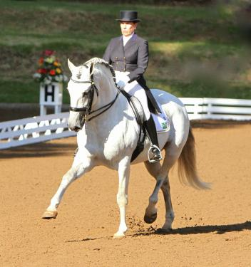 Zepelim Interagro and Pia Aragão win the Grand Prix at the Welcome Back to White Fences I show in Loxahatchee, Florida, with a 71.300 percent (Photo courtesy of Interagro Lusitanos)