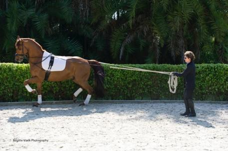 "Kathy Connelly (shown here long lining) and Betsy Steiner will kick-off ""How to Develop a Winning Program and Partnership With Your Horse"" at the 2014 Adequan/USDF Convention. (Photo: Brigitte Voelk)"