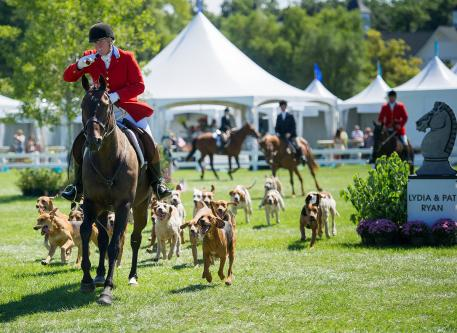 Millcreek Hunt demonstrated the talents of the hounds. Photo: Andrew Ryback/ChicagoEquestrian
