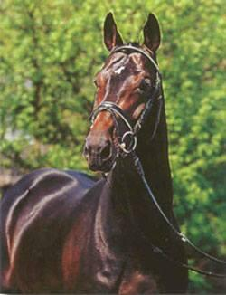 Tantris (Traumdeuter x Aktuell-Volturno) as a three year old stallion in Germany (Photo: Turning Point Farm - Jeanne McDonald)