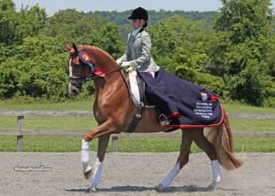 Alice Tarjan and Oldenburg mare Elfenfeuer (Florencio x Sion) participated in the Markel/USEF Young Horse Program. (Photo: Mary Phelps - phelpsphotos.com)