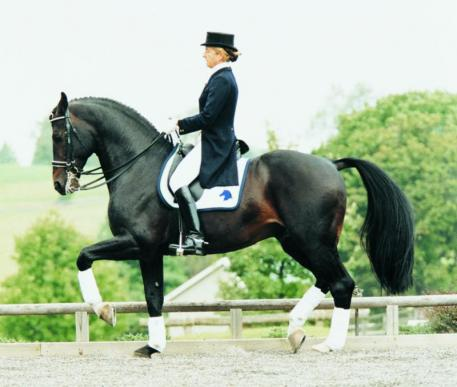 Contango, Preferent is currently the number one ranked Dressage Sire by the USEF