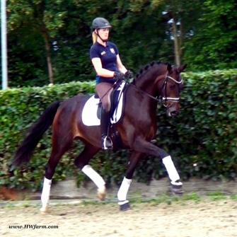 QuiteFine HW, Rhinelander, Hanoverian, Mare, Horses Worldwide