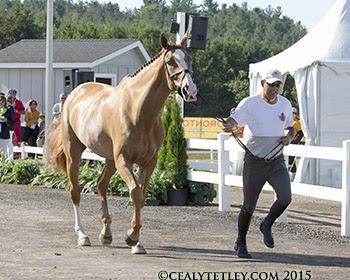 Yann Candele of Caledon, ON, and Showgirl, owned by the Watermark Group. (Photo © Cealy Tetley)