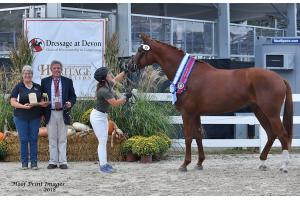 The Mare Championship Dhanube (Destano/Sp.pr Lhorna Doone), a 5-year-old chestnut Oldenburg, bred by Maurine Swanson of Slatington, PA.