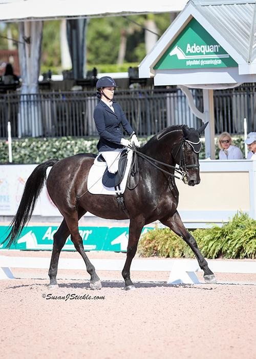 Para Dressage Cpedi 1 2 3 Competition Kicks Off In